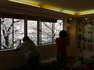 Sakura Exhibition 2011